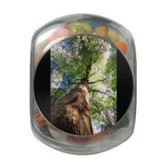 Árbol de haya del Viejo-Crecimiento Frascos De Cristal Jelly Belly