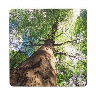 Árbol de haya del Viejo-Crecimiento Posavasos De Puzzle