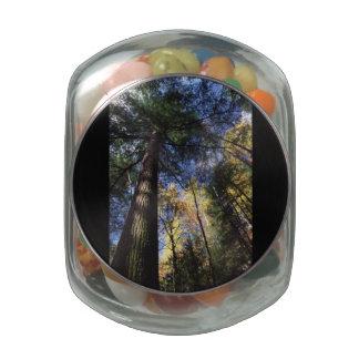 árbol de hemlock del viejo crecimiento frascos de cristal jelly belly