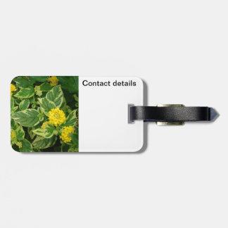 Árbol de hoja perenne con amarillo etiquetas de maletas