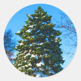 Árbol de hoja perenne en invierno pegatina redonda