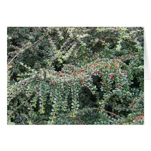 Árbol de hoja perenne hermoso felicitaciones