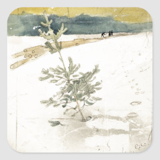 Árbol de hoja perenne etiqueta