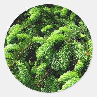 Árbol de hoja perenne pegatina redonda
