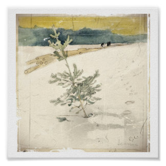 Árbol de hoja perenne póster