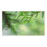 Árbol de hoja perenne tarjeta de visita