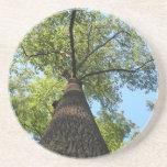 Árbol de Kentucky Posavasos Manualidades