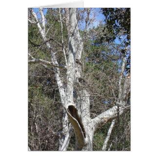 Árbol de la cala de Malibu Tarjeta De Felicitación