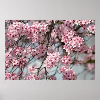 Árbol de la flor de cerezo póster