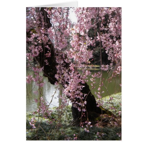 Árbol de la flor de cerezo tarjeta pequeña