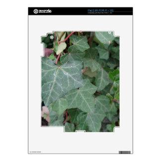 Árbol de la hiedra iPad 2 skin