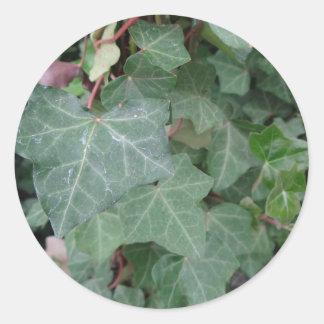 Árbol de la hiedra pegatina redonda
