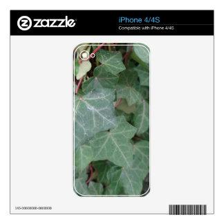 Árbol de la hiedra skins para eliPhone 4