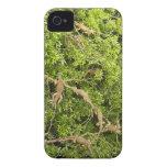Árbol de la iguana iPhone 4 carcasa