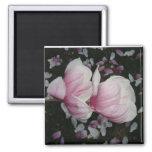Árbol de la magnolia en la floración imán de frigorifico