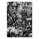 Árbol de la magnolia felicitacion