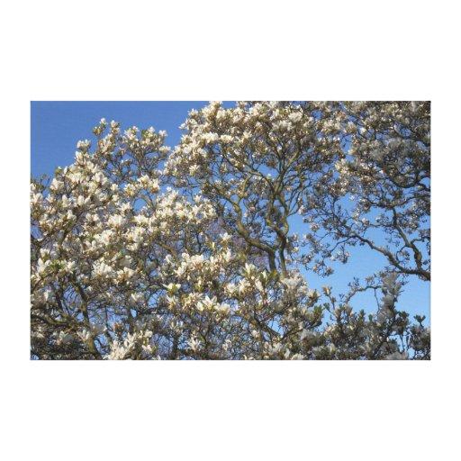 Árbol de la magnolia impresiones en lona