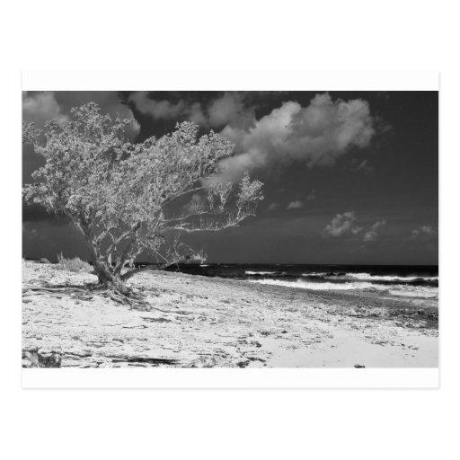 Árbol de la playa postal