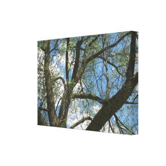 Árbol de la primavera en lona envuelta naturaleza  impresion de lienzo