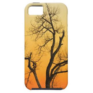Árbol de la puesta del sol de la estación del iPhone 5 fundas