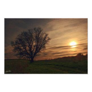 Árbol de la puesta del sol fotografías