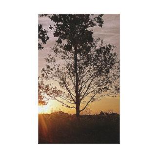 Árbol de la puesta del sol lienzo envuelto para galerias