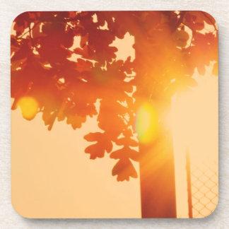 Árbol de la puesta del sol posavasos de bebidas