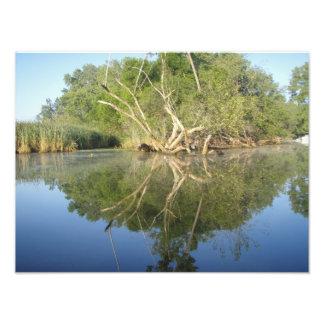 Árbol de la reflexión fotografia