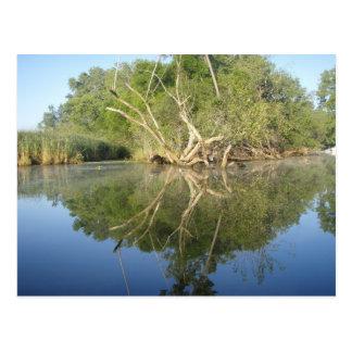 Árbol de la reflexión tarjetas postales