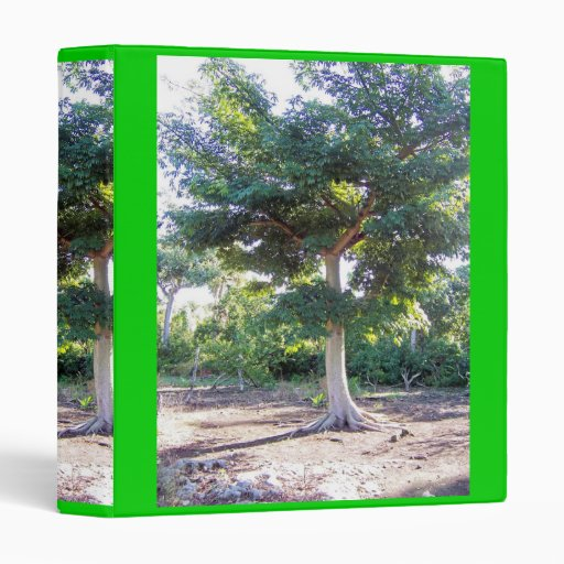 """Árbol de la Sabiduría-carpeta Carpeta 1"""""""