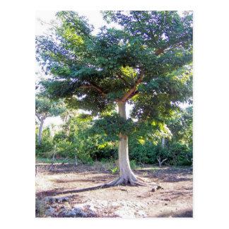 Árbol de la Sabiduría-postal