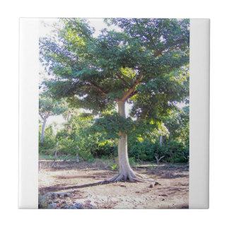 Árbol de la Sabiduría-teja Azulejo Cuadrado Pequeño