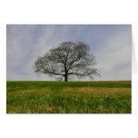 Árbol de la tarjeta de la vida