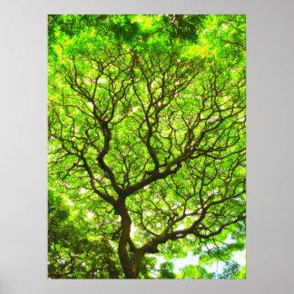 Árbol de la vaina de mono póster