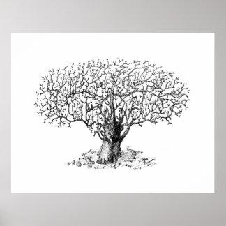 Árbol de la vida - animales póster