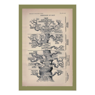 Árbol de la vida/del pedigrí del hombre poster
