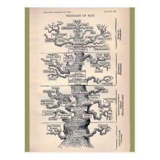 Árbol de la vida/del pedigrí del hombre postales