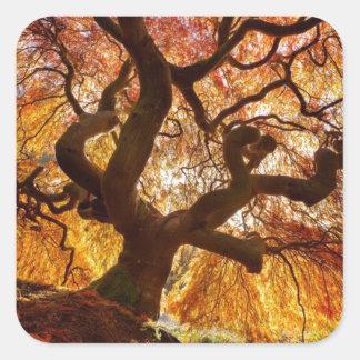 árbol de la vida etiqueta