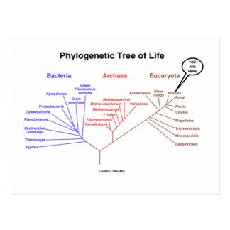 Árbol de la vida filogenético - usted está aquí (l tarjeta postal