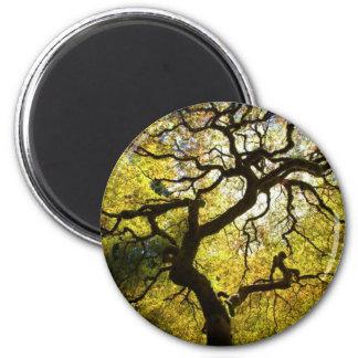 Árbol de la vida imán redondo 5 cm