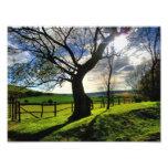Árbol de la vida impresion fotografica