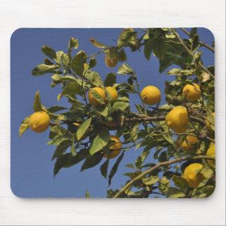 Árbol de limón alfombrillas de raton