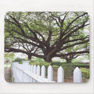 Árbol de Live Oak, Natchez, cojín de ratón del ms Tapete De Raton