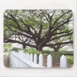 Árbol de Live Oak, Natchez, cojín de ratón del ms Alfombrillas De Ratón