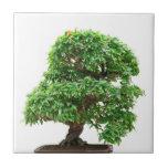 Árbol de los bonsais de Granatum del Punica Azulejo Cuadrado Pequeño