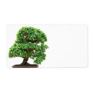Árbol de los bonsais de Granatum del Punica Etiqueta De Envío