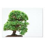 Árbol de los bonsais de Granatum del Punica Anuncio