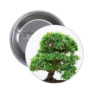 Árbol de los bonsais de Granatum del Punica Pins