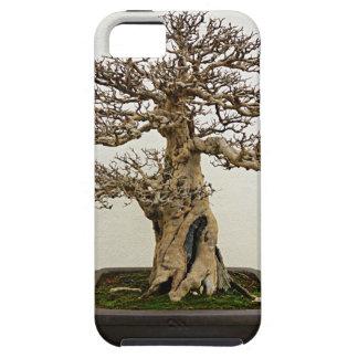 Árbol de los bonsais de la granada funda para iPhone SE/5/5s