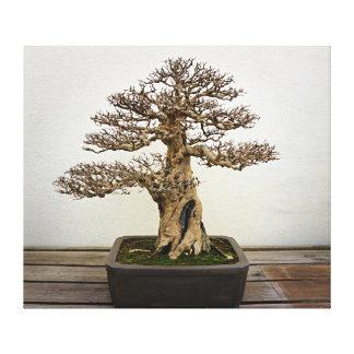 Árbol de los bonsais de la granada lona envuelta para galerías